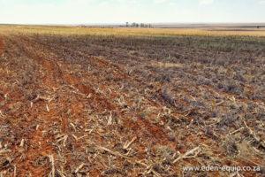 No-till Fine Seed Planter 14-Row / 20-Row