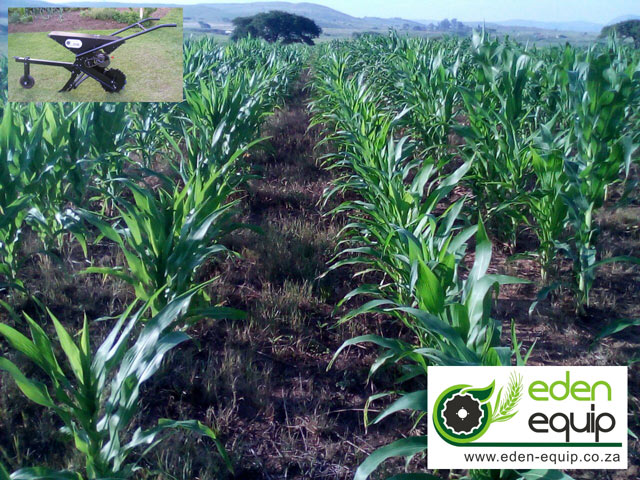 ox animal drawn no till single row maize planter eden equip equipment