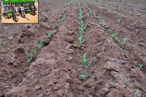 Interrow Seeder