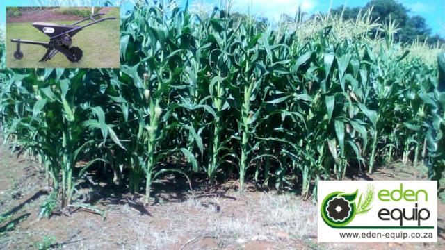 ox animal drawn no till single row maize planter eden equip equipment