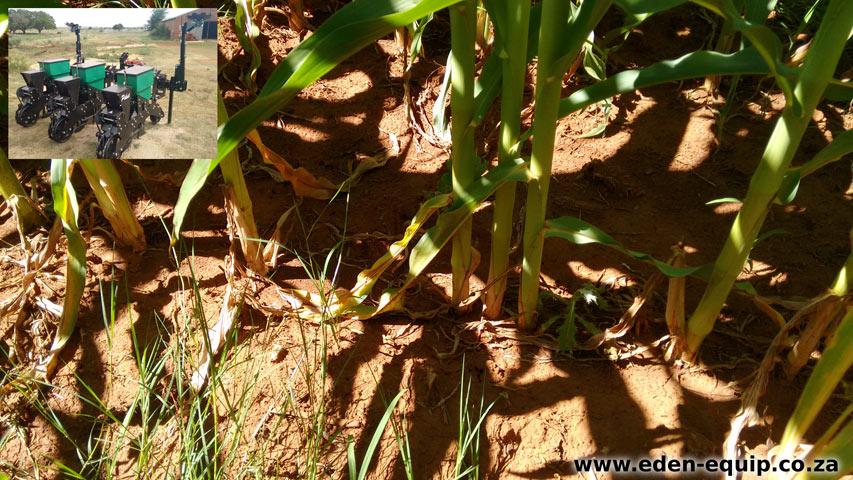 eden equip equipment piket planters economy no till maize planter